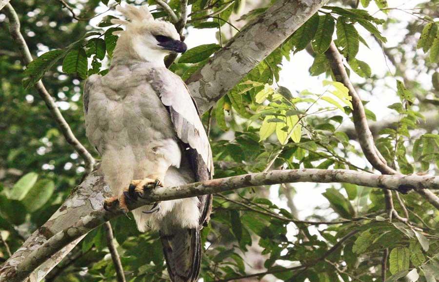Tambopata Amazon Tres Chimbadas